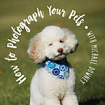 How to Photograph Your Pets with Michael Downey