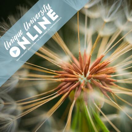 UUOnline (Free): Macro Photography with Heather Larkin